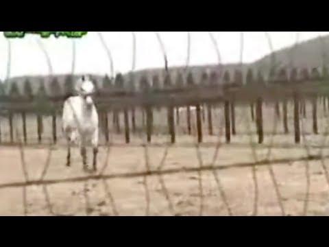 【馬 可愛い】武豊に駆け寄って挨拶しにくるクロフネが可愛すぎる!!2人の絆がわかる動画《名コンビ 感動》 - YouTube