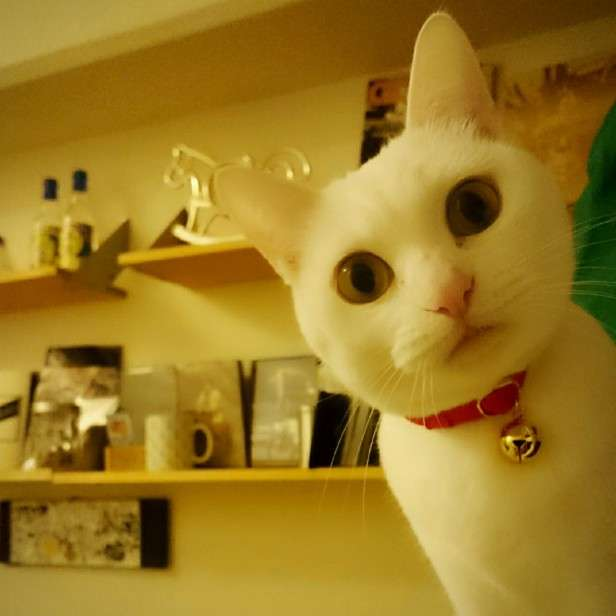 愛猫に「猫首輪」が必要な本当の理由とは? | 【ねこ大学】猫好きさんのための情報サイト