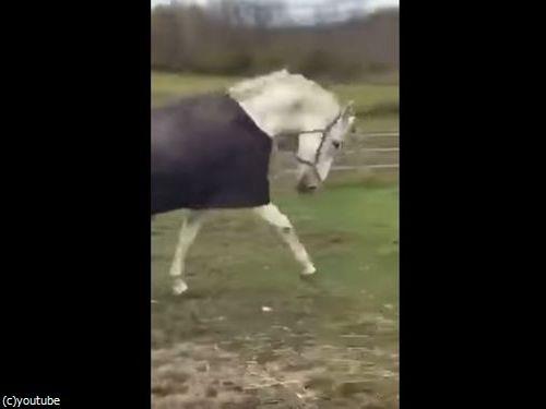 馬の前で「馬のマスク」を外してみたら→こんな反応を見せるとは!