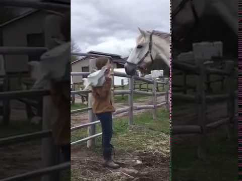 How to surprise a horse - YouTube