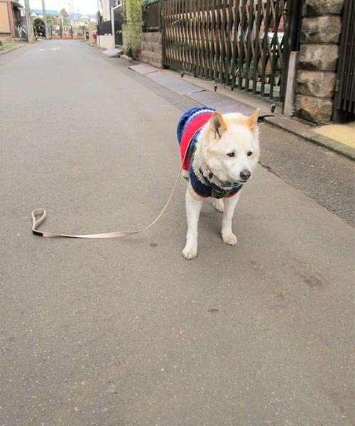 「ぼくのこと、置いてくの…?」散歩中、犬のリードを落としてしまい振り返ると