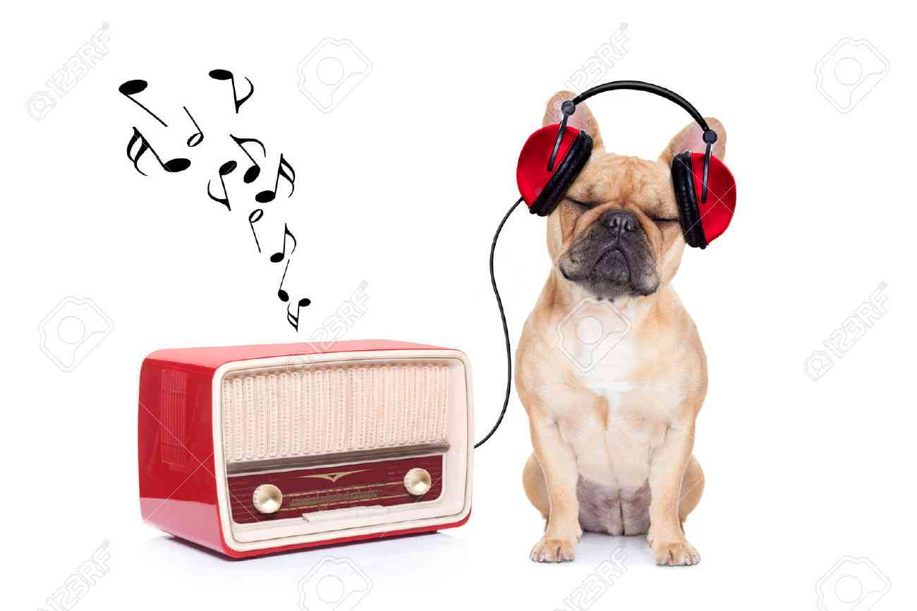 今の気分で聞きたい曲!