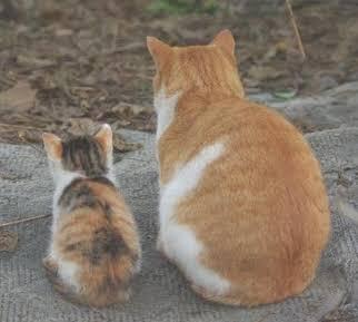 猫背のなおしかた