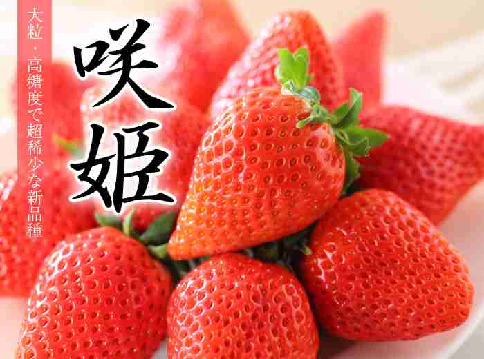 「鉄腕!DASH!!」参考に品種開発 TOKIOがイチゴ農家に影響与える