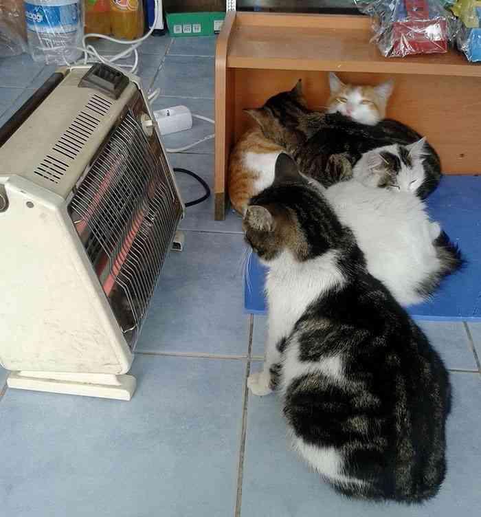 凍える寒さから野良犬・野良猫を守るために、お店を開放した人々。その優しさに胸が熱くなる