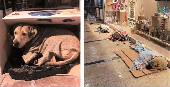凍える寒さから野良犬・野良猫を守るために、お店を開放した人々。その優しさに胸が熱くなる(8枚) | PECO(ペコ)