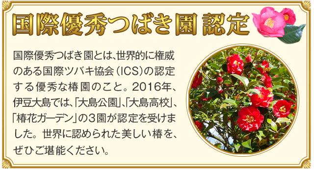 第62回 伊豆大島 椿まつり|東海汽船株式会社