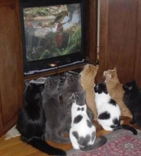 テレビを観ていてあり得ないだろと思う事