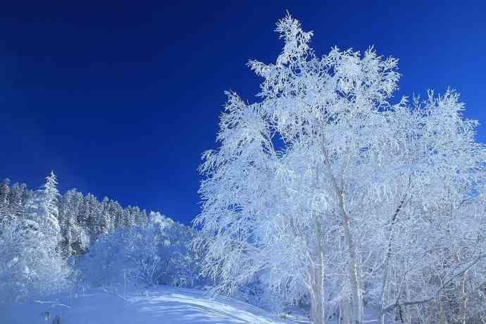 冬の自然現象
