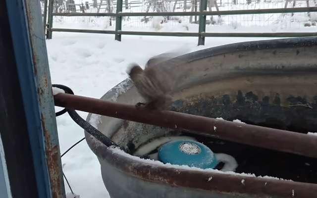 ホッとするね! 鉄パイプに足が凍りついた小鳥、救出される