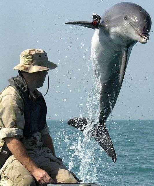 ロシアがイルカの軍事利用を再開か。米軍はアシカも研究・訓練 - まぐまぐニュース!