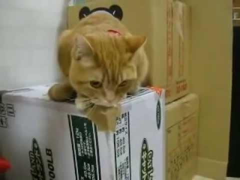 ご飯が待ちきれない猫 Very hungry cat - YouTube