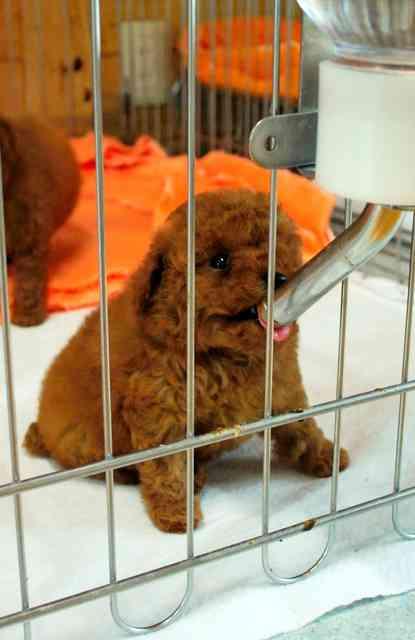 犬猫の流通、1年で10万匹増 途中で2万5千匹死ぬ (朝日新聞デジタル) - Yahoo!ニュース