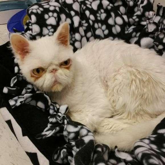 【閲覧微注意】高齢の飼い主に放置されクリーチャー化した猫。それでも人間を愛することをやめなかった(米)