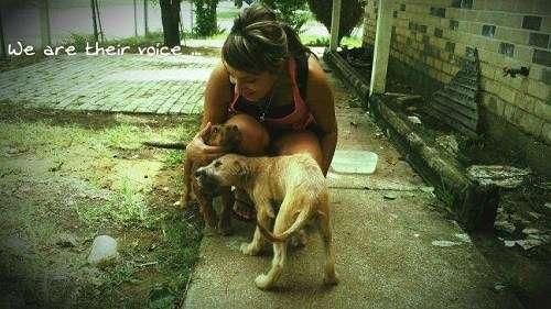 「犬捨て公園」という異名… 犬の地獄と化した公園で犬を保護し続ける女性が涙の訴え|サプライズ