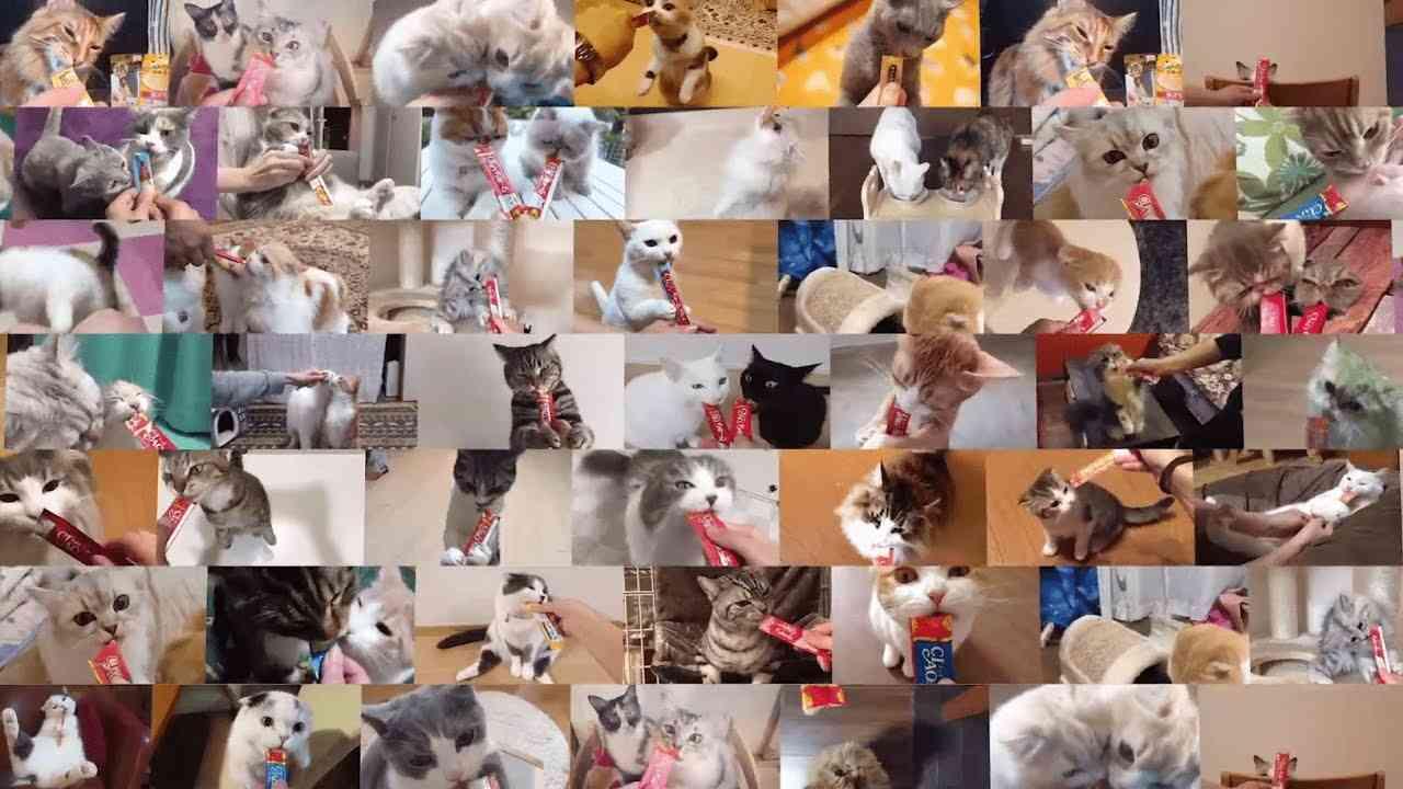 CIAOちゅ~るWEB限定MV「ちゅ~るしよ!」 - YouTube