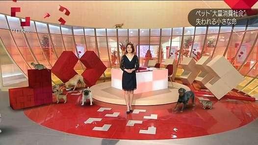 NHK クローズアップ現代+ 2016年5月26日「追跡!ペットビジネスの闇」HD高画質 160526 - Dailymotion動画