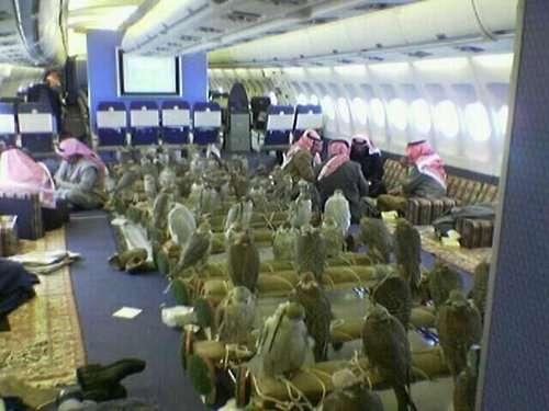 サウジアラビアの王子、タカ80羽を飛行機に乗せるため80席のチケットを購入→機内はこんな状況に