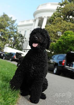オバマ大統領の愛犬が少女の顔に噛みつく 数針縫う怪我で傷は免れず
