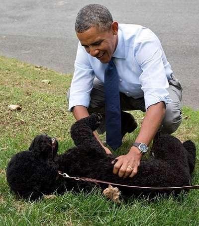 【イタすぎるセレブ達】オバマ大統領の愛犬が少女の顔に噛みつく 数針縫う怪我で傷は免れず | Techinsight|海外セレブ、国内エンタメのオンリーワンをお届けするニュースサイト