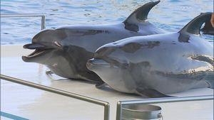 水族館からイルカが消える!? ~国際批判に揺れる現場~ - NHK クローズアップ現代+