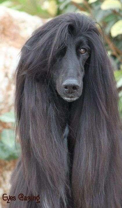 ワンレングスの写真をはるトピ