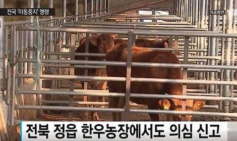 鳥インフルに続き口蹄疫が発生 韓国全土8日0時まで牛など移動停止に   ワールド   最新記事   ニューズウィーク日本版 オフィシャルサイト