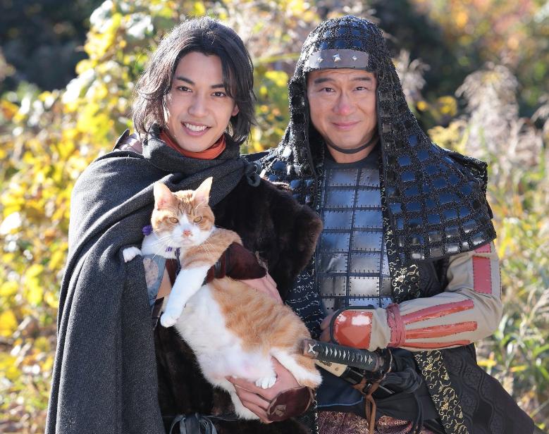 「猫忍」金時の種類は何?体重も話題に!あなごも出演! - 保護猫モモ&ナナのブログ!