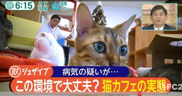 猫カフェ東京で悪質でひどい不衛生な所「ねこのて」とは! - 保護猫モモ&ナナのブログ!