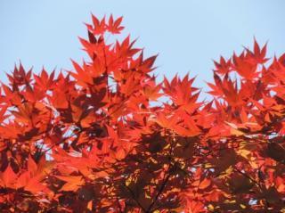 日本が誇れることランキング1位「四季がある」 - Ameba News [アメーバニュース]