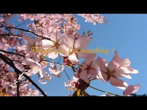 David Lanz & Gary Stroutsos - Living Temples - YouTube
