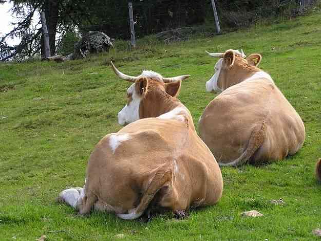 食べてすぐ寝たら太る?の考察 | 痩せ箸ダイエットブログ | 55キロ痩せました