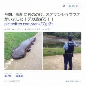 全文表示 | 「オオサンショウウオ」をオタマジャクシと勘違い 「放射能の影響で巨大化!」ツイートが炎上 : J-CASTニュース