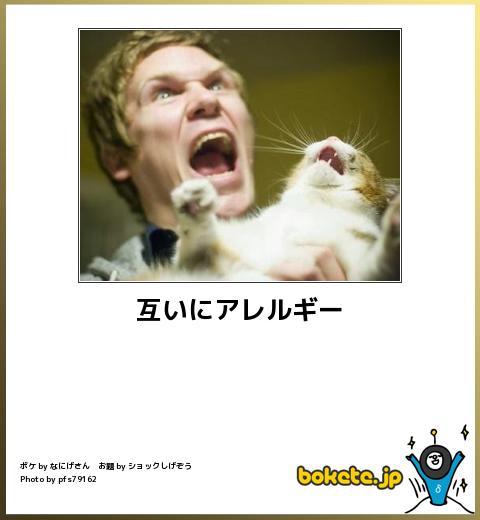 猫嫌いな人 苦手な人集まれ〜
