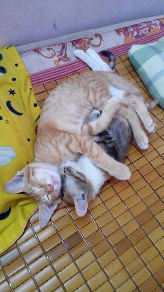 愛妻の出産に立ち会い子育ても…イクメン父猫の家族愛に心温まる