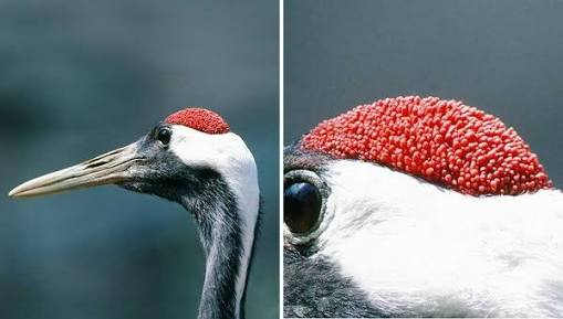 【閲覧注意】鳥肌のたつ画像を貼るトピ