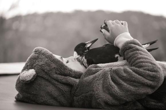 傷ついたカササギフエガラスのヒナを保護したら、やることなすこと人間じみてきた。誰よりも家族を思いやる愛情深い鳥人間となった。(オーストラリア) : カラパイア