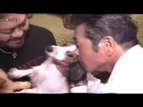 探偵ナイトスクープ 「仲の悪い犬と猫」 2015年10月16日放送 - YouTube