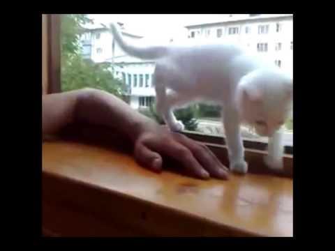 心配性な子猫 飼い主を助けたい - YouTube
