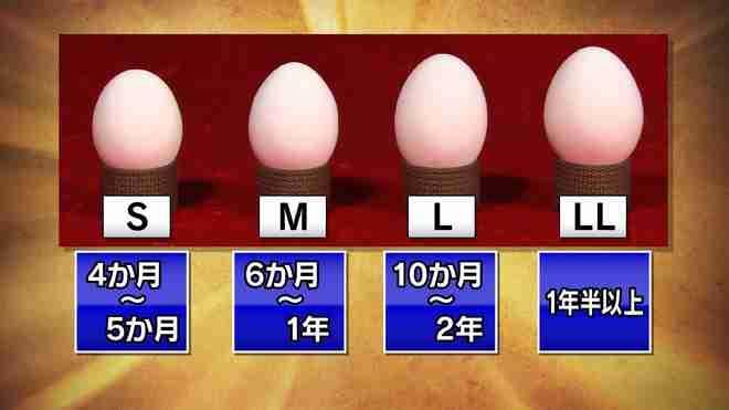 卵のサイズ:MとLどちら買いますか?