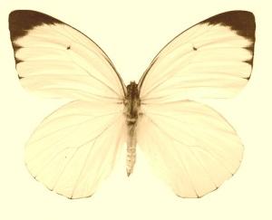 白死蝶さんのプロフィール