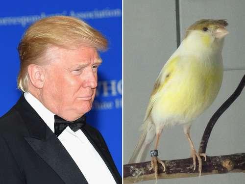 ドナルド・トランプ大統領にそっくりな「熱帯魚」が発見される!