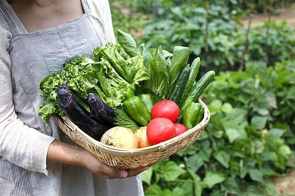 家庭菜園  何を作りますか
