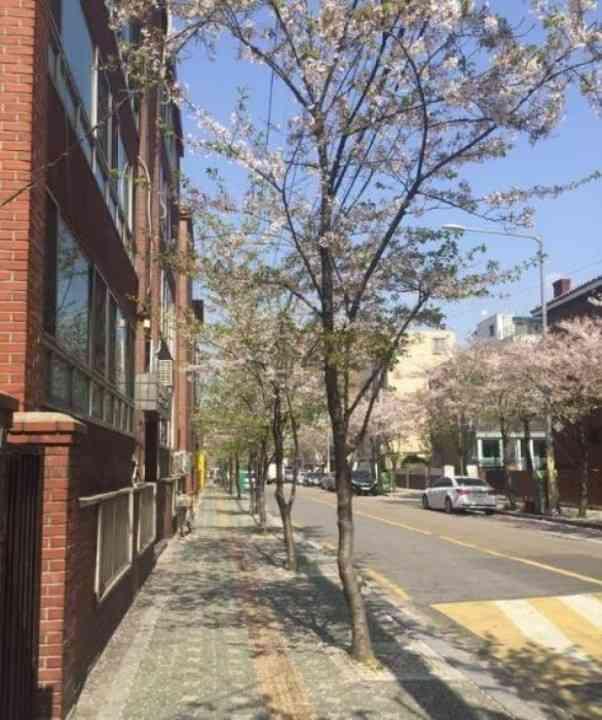 """ソウルの""""臭い""""街路樹、その秘密は夜にあった=韓国ネット「... - Record China"""