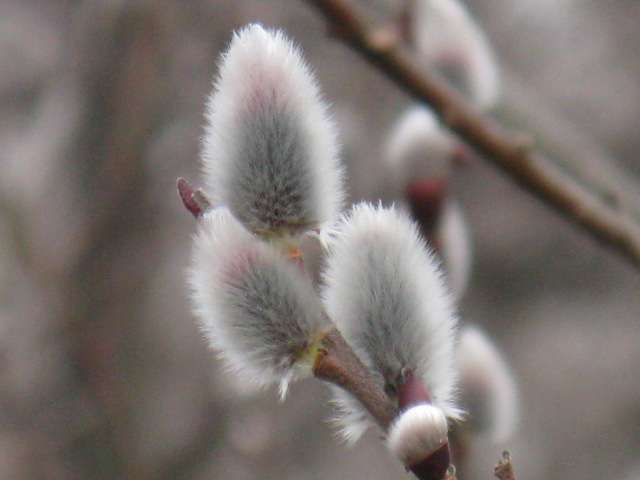 春の画像を貼って癒されるトピ