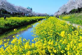 【画像】日本の立春