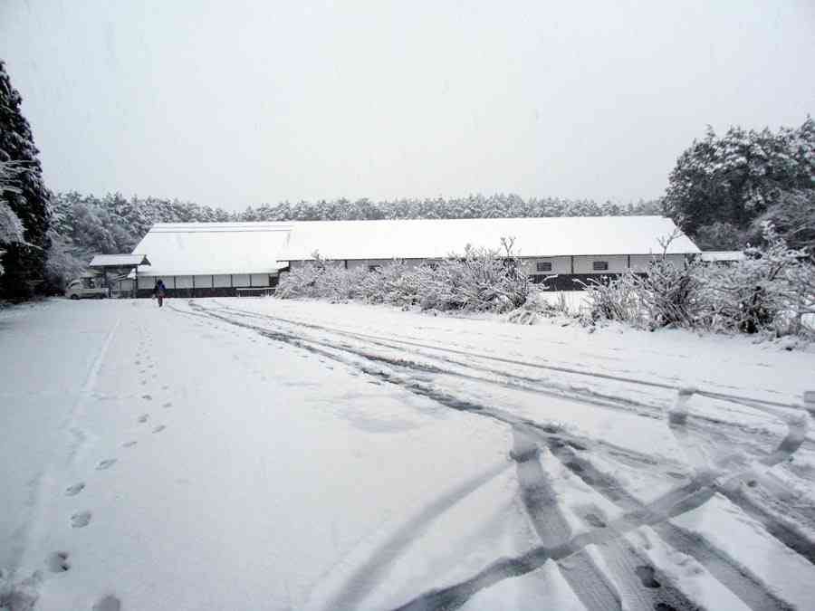 富士花鳥園 公式ブログ ●初雪です●