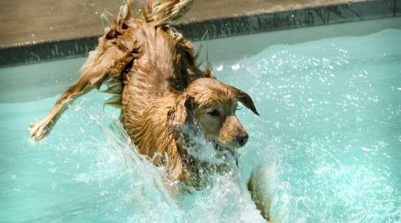 水中での呼吸が可能となる「液体呼吸」実現に向けて犬・ネズミ・ハムスターによる訓練が開始される(ロシア) : カラパイア