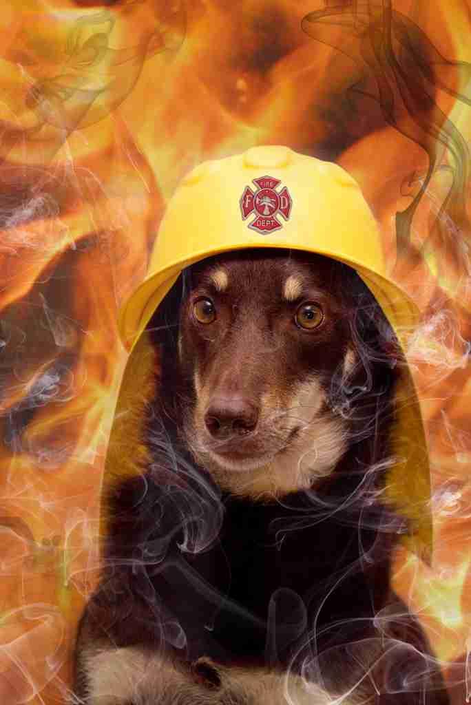 消防士好きな人ー!