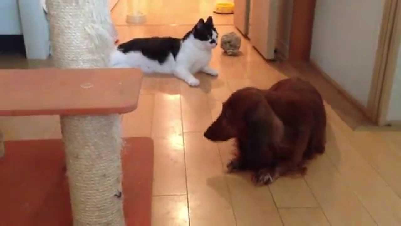 猫が苦手な人、嫌いな人集まれ〜